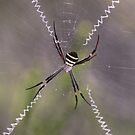 St Andrews Cross Spider by Paul Duckett