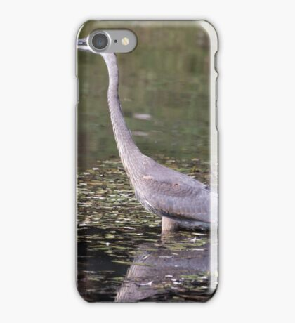 Great Blue Heron in a pond iPhone Case/Skin