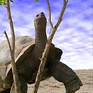 """""""Reaching For The Green"""" - giant tortoise has determination by ArtThatSmiles"""