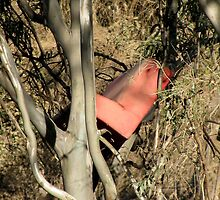 red couch in river gums by betty porteus