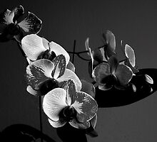 My orchids 1 by Marlies Odehnal