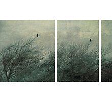 Two Birds by Anne Staub