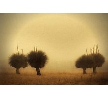 Grass Trees (Xanthorrhoea) in Fog, Aged Photographic Print
