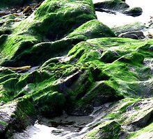 rock and velvet by delfinada