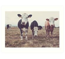 Curious Cows Art Print