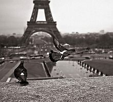 Paris by Louise LeGresley