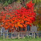 Daylesford in the Fall ( 4 ) by Larry Lingard-Davis