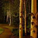 night aspens.  snowmass, colorado by mellychan