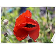 View From A Red Poppy Poster