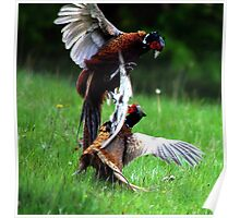 The feathers are flying Poster