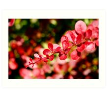 Branch with red leaves - Tuscany countryside, Italy Art Print