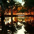 Golden Glow over Flooded Creek. by Julie Sleeman