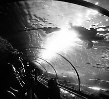 The Tube by Tim Luczak