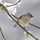 catching snowflakes by J.K. York
