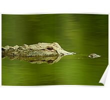 """Reflective Eyes"" - alligator in the Florida Everglades Poster"