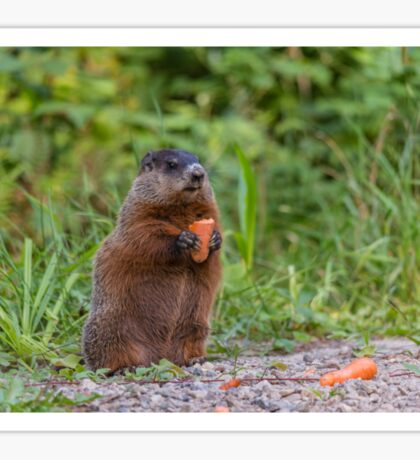 The Beaver eating a carrot Sticker