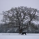 Sycamore in winter!! by poohsmate