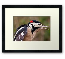 Woodpecker Framed Print