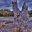 Old stump in swamp by Peter Rattigan