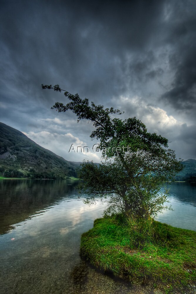 Ullswater Tree by Ann Garrett