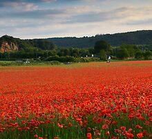 Bewdley Poppy Field by Cliff Williams