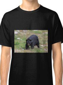 A lone, large black bear Classic T-Shirt