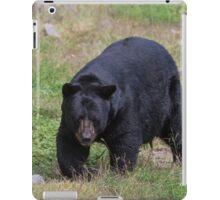 A lone, large black bear iPad Case/Skin