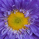 Yellow and Purple by Mukesh Srivastava