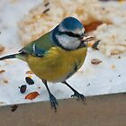 Bluetit by Peter Stone