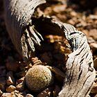 lil' desert cactus by BWS052