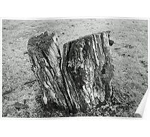 Tree Stump - Black And White Poster