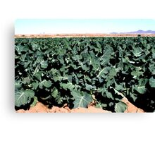 Broccoli...  Canvas Print