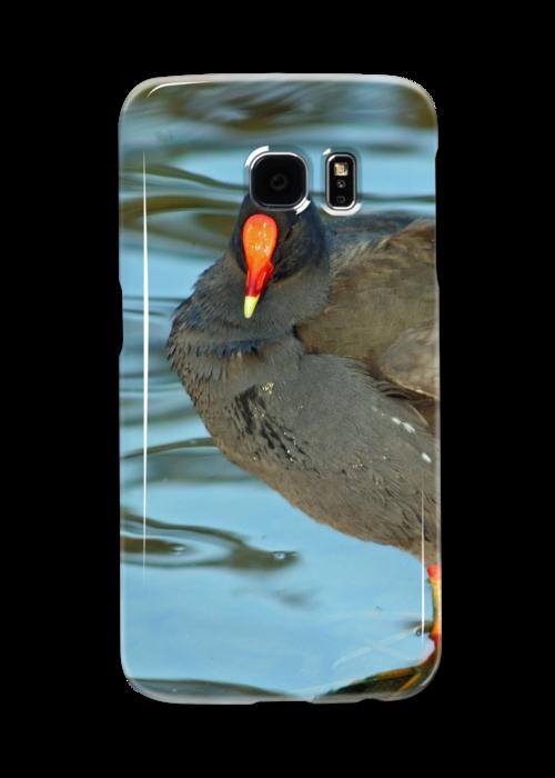 Swamp Hen by STHogan