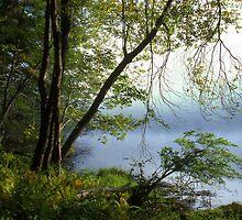 Morning Mist on Herron Pond by Tony Ramos