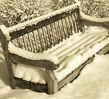 A Bench by John Schneider