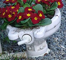 Potty Planter by Jann Ashworth