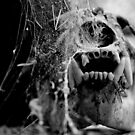Haunted Bear by Scott  Hafer
