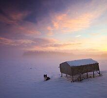 Border Collie in the snow at sunrise by StuartStevenson