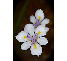 Playful Dietes Photographic Print