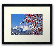 Snowy Mountain Ash Framed Print