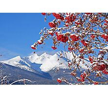 Snowy Mountain Ash Photographic Print