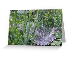 Watery Web Greeting Card