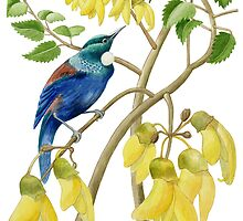 Tui on Kowhoi by Maureen Sparling
