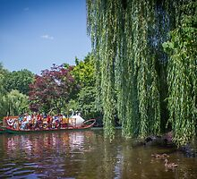 swan boat by Laura Cardello