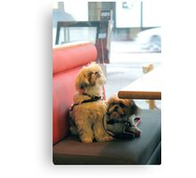Sampson and Delilah Canvas Print
