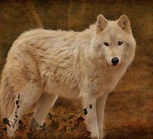 Lobo II by Sandy Keeton