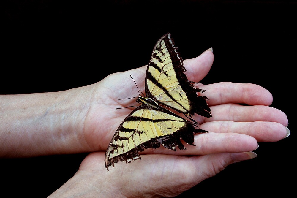 Butterfly in Hand by Denice Breaux
