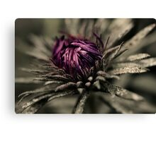 Abstract Purple Aster Canvas Print