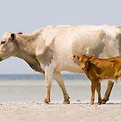 """Sea Cows"" - wild cows on Cedar Island, NC by ArtThatSmiles"