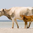 """Sea Cows"" - wild cows on Cedar Island, NC by John Hartung"